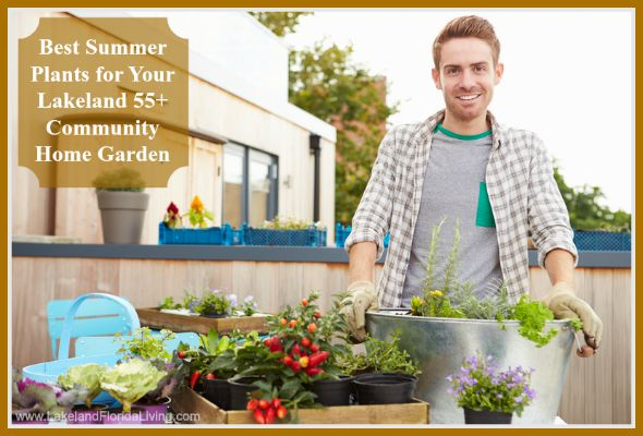 These are typical plants that you can put in your Lakeland 55+ community home's garden this summer.